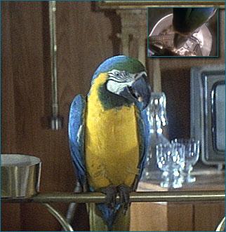 max_parrot.jpg
